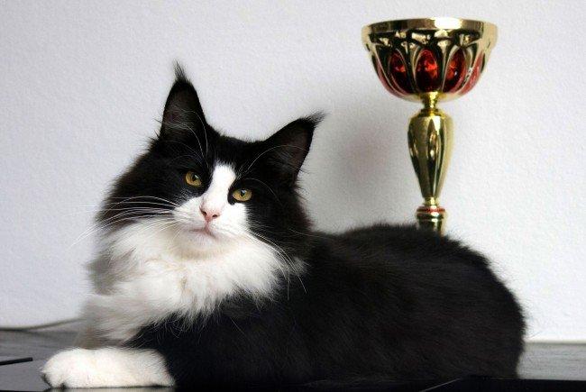 Partnersuche für katzenfreunde