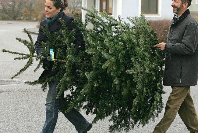 Jedes Jahr werden in Österreich rund 2,6 Millionen Christbäume aufgestellt.