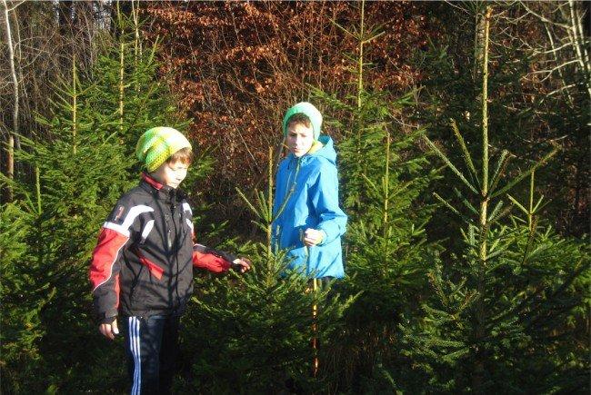 Für Kinder das Größte: Den eigenen Christbaum selber auszusuchen und zu fällen.