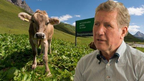 Millionenbetrag für gesundes Vieh