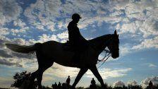 Kaufpreis für Pferd wird zurückerstattet