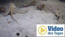 Unterwasser-Duell mit unerwartetem Ende