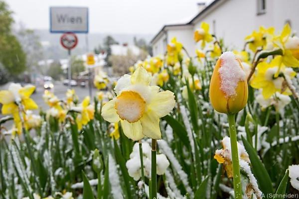 Sogar in Wien fiel die Temperatur auf unter Null