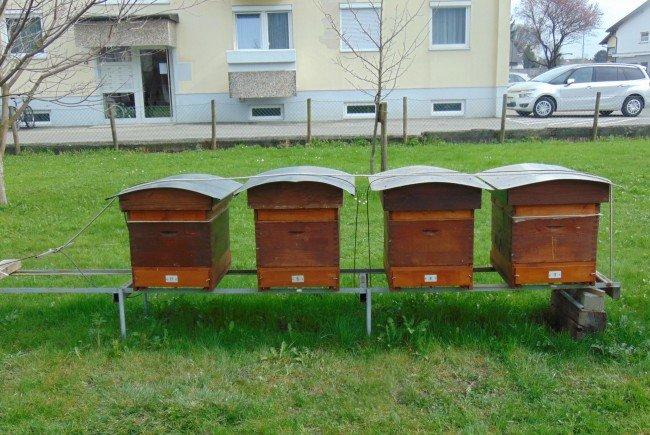 Jeder kann sein eigenes Bienenvolk erwerben