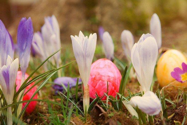 Das Osterei liebt das Versteckspiel im Garten
