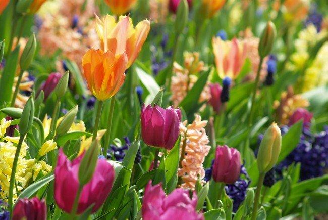 Ostern im Garten – das Schöne noch schöner machen