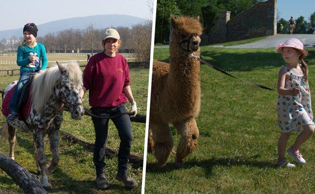 Bei der Tierolympiade können sich Besucher mit den tierischen Bewohnern von Schloss Hof messen.