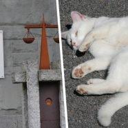 Tierquälerei: Geheimprozess um grausam getötete Katze in Vorarlberg