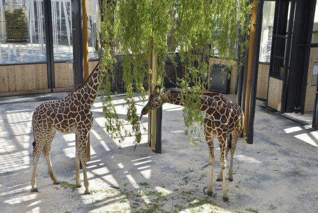Fleur und Sofie im neuen Giraffenpark