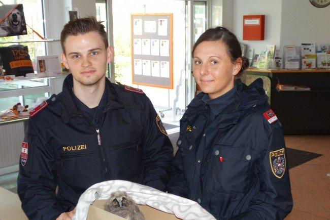 Polizisten brachten das Eulenbaby zum Wiener Tierschutzverein