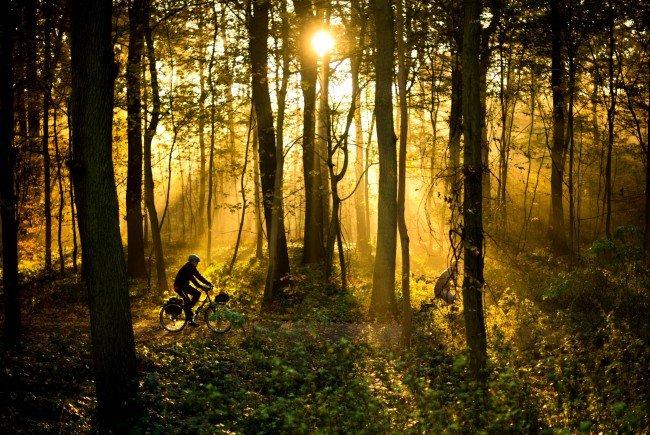 Ein neunjähriger Bub verbrachte in Oberösterreich die Nacht allein im Wald. Weshalb der Bub von zu Hause ausgebüxt war, ist unbekannt.