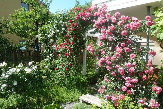 Am Sonntag können sich alle Interessierten von der Vielfalt und Schönheit der Garten-Schmuckstücke inspirieren lassen