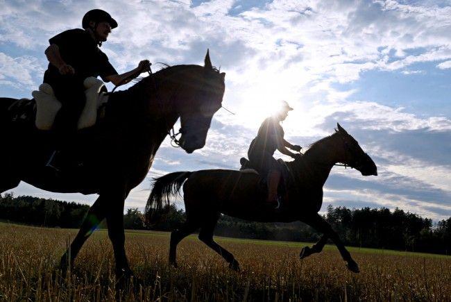 Partnersuche pferd