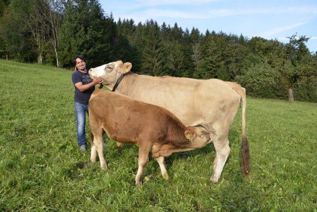 Auch Sohn Robert hilft immer tatkräftig beim Heuen mit. Die Kühe freuen sich bereits jetzt schon auf das mit viel Liebe und Leidenschaft eingetragene Heu.