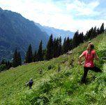 Vielfalter auf der Alp Gavar