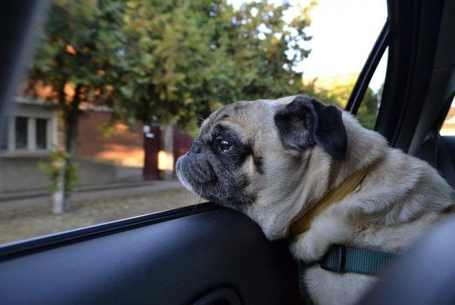 Worauf Sie bei einer Urlaubsreise mit dem Hund achten sollten.
