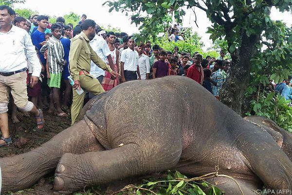 Scharfschütze schoss dem Elefanten gezielt in die Stirn