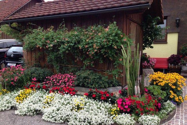 Wunderschöne Blumen in den Harder Gärten
