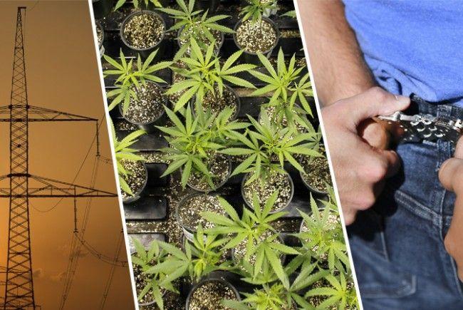 Ein 46-Jähriger muss wegen Cannabis-Anbaus und -Verkauf nicht rechtskräftig für vier Jahre ins Gefängnis.