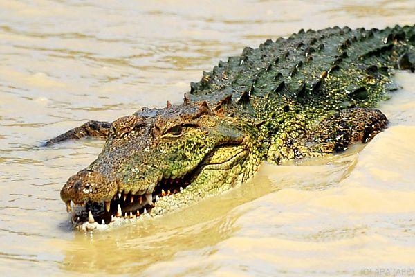24-jähriger britischer Journalist wurde von Krokodil angegriffen