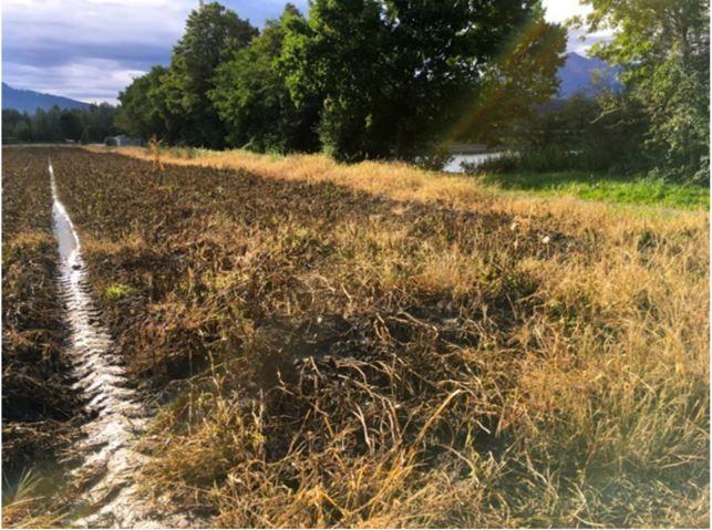 Die Grünen werfen den Bauern achtlosen Umgang mit Umweltgiften vor.