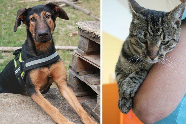 Beim Tag der offenen Tür warten viele Highlights auf Tierfreunde