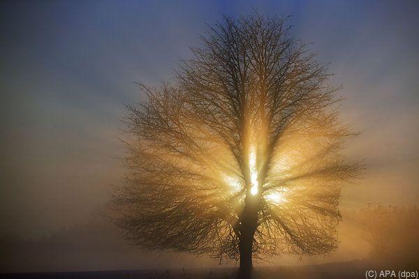 Sonnenschein und Nebelfelder könnten sich mischen