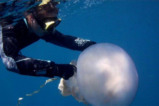 Forscherin Karen Kienberger beim Vermessen einer Riesenqualle in Spanien