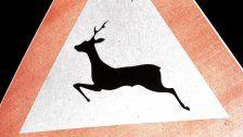 Jagdsaison 2017: 12.550 Wildtiere geschossen